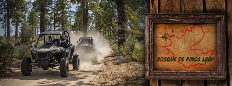 pine-forest-loop-baja-legends-rally-2